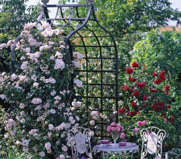 De Orangerie - voor een exclusieve Rozenboog of Obelisk - Rozen prieel