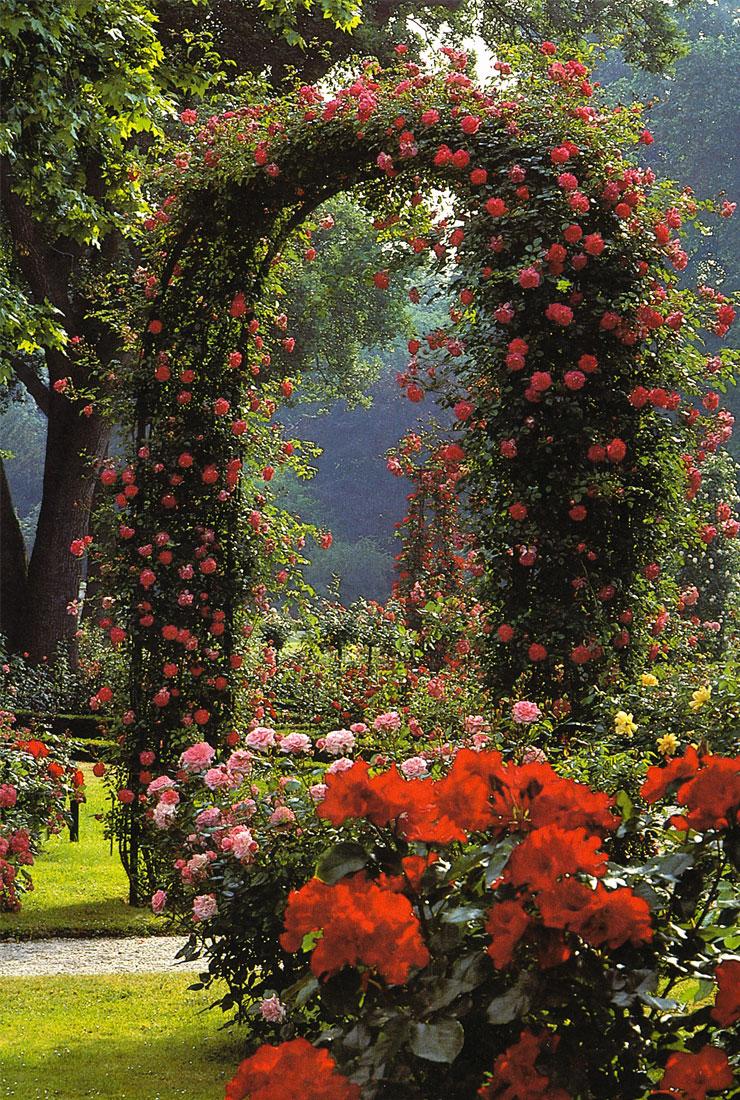 De Orangerie - voor een exclusieve Rozenboog of Obelisk - Rozenboog