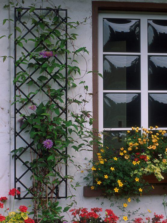 De Orangerie - voor een exclusieve Rozenboog of Obelisk - Rozen trellis R9-1