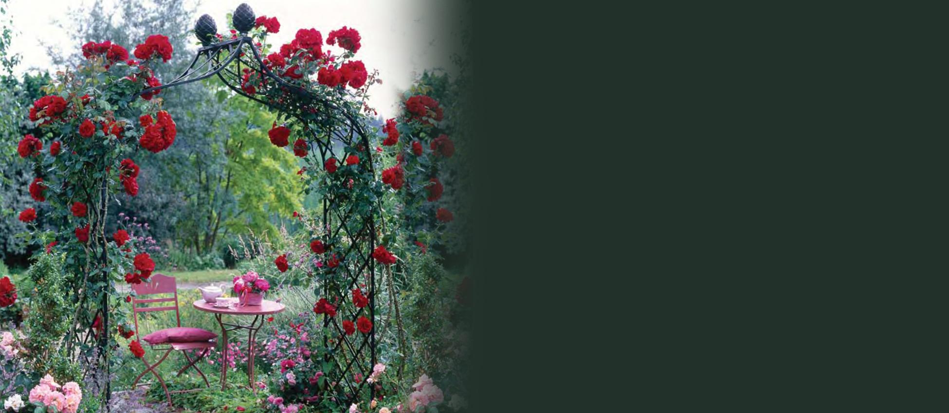 De Orangerie - voor een exclusieve Rozenboog of Obelisk