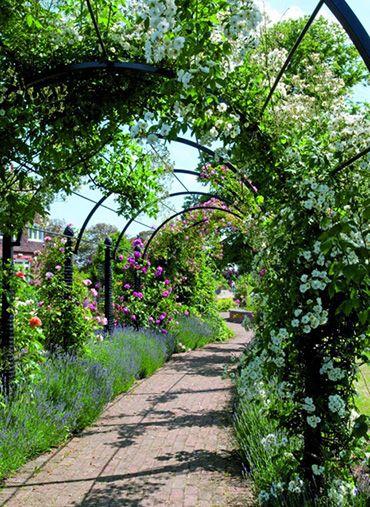 De Orangerie - voor een exclusieve Rozenboog of Obelisk - Rozenboog Berceau St. Albans