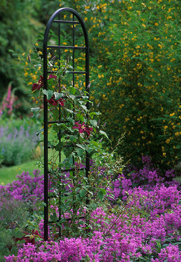 Burlington trellis