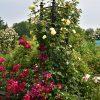 e Orangerie - voor een exclusieve Rozenboog of Obelisk - Rozen Obelisk Eltville
