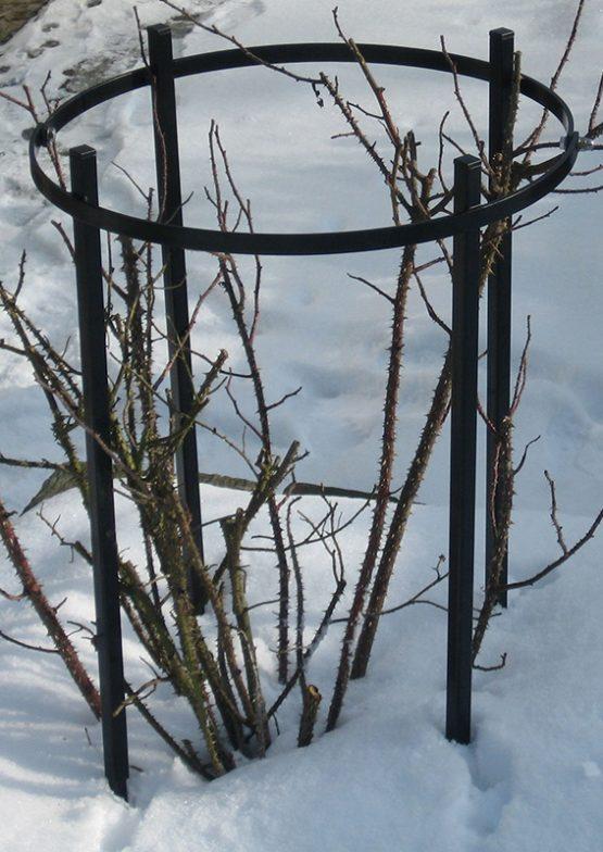 De Orangerie - voor een exclusieve Rozenboog of Obelisk - Rozen trellis Jean Vibert
