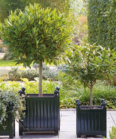 Versailles plantenbakken